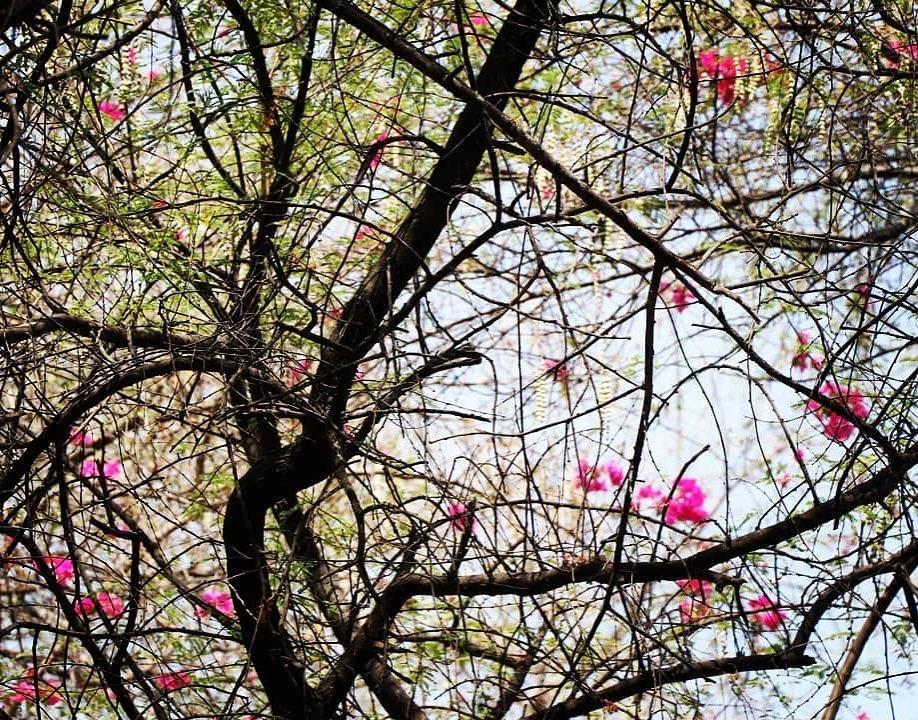 Photography by : Palavii Sharma